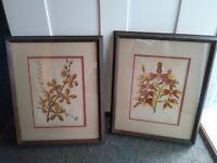 Pair Framed Matted c1870 Mackenzie Botanical Prints 20x17