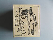 100 PROOF PRESS RUBBER STAMPS DANDELION DIAGRAM NEW wood STAMP