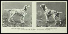 GRAVURE CHIEN CONCOURS  FIELD TRIALS DOG ENGRAVING 1888