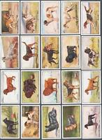 1926 Sanders Bros (Custard) Dogs Tobacco Cards Complete Set of 20