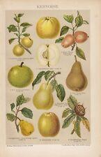 Kernobst Apfel Birne Quitte Mispel Obst Früchte Frucht LITHOGRAPHIE von 1895