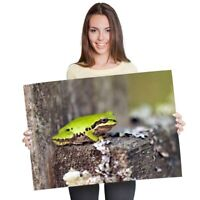 A1 - Cute Green Frogs Nature Poster 60X90cm180gsm Print #8894