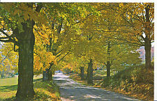 America Postcard - Typical Vermont Country Road in its Early Fall Colors  A7482