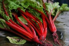 Seeds Chard Mangold Al Vegetable Organic Heirloom Russian Ukraine