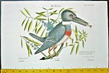 Original hand col.Catesby engr.Kingfisher,Ispida,Eisfischer,c.1753.#38