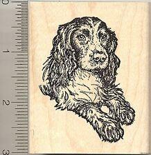 Black English Cocker Spaniel Rubber Stamp, Sporting Dog K50508 WM
