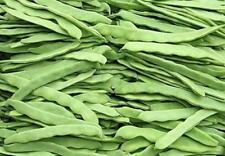 50 grams Bean white Green Bean (Phaseolus vulgaris) vegetable seeds