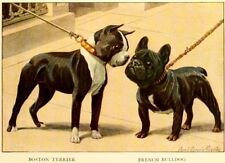 Dog Postcard: Old Print repro - Boston Terrier and French Bulldog - 2 cute dogs!