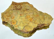 LARGE Ediacaran Precambrian fossil Medusoid Nemiana simplex plate #11645 UKRAINE