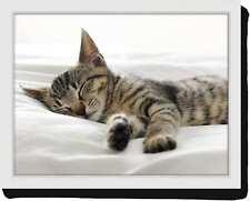 lustiges Kissentablett Sofatablett Lap Tray Knietablett schlafende Kätzchen