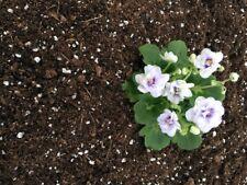Hirt's Gardens All Natural African Violet Soil - 4 Quart