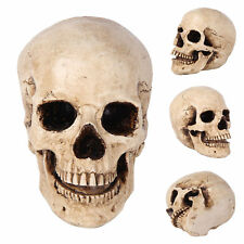 1:1 Realistic Life Size Human Anatomy White Resin Replica Skull Halloween Decor