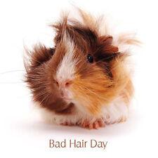 Cavia BIANCO greeting card BAD HAIR DAY DIVERTENTE fotografica PET CARD