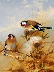 BULLFINCHES A. Thorburn birds grass Tile Mural Kitchen Backsplash Marble Ceramic