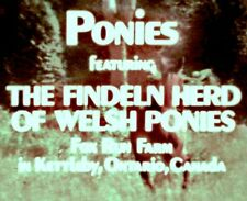 "16mm ""PONIES"" featuring the Findeln Herd of Welsh Ponies"