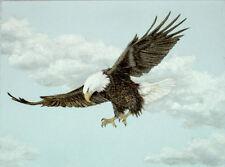 Original Pastel Drawing American Bald Eagle Flying Sally Porter Wildlife Art