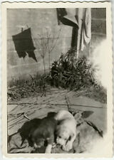 PHOTO ANCIENNE - VINTAGE SNAPSHOT - CHIEN CHIOT OMBRE LINGE - DOG PUPPY SHADOW