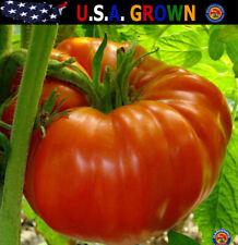 Beefsteak Tomato Seeds Heirloom lycopersicum 150 Seeds Heirloom Gardening