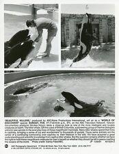 SHAMU THE KILLER WHALE BEAUTIFUL KILLERS SEA WORLD ORIGINAL 1991 ABC TV PHOTO