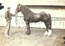 Original Vintage 1900s-20s RP- Horse- Man Holds Farm Work Horse by Barn