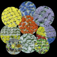 120 x Flower Tufts - Self Adhesive - Multi Colours - Wargaming Basing Railways