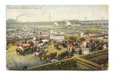 Chicago - Cattle Pens, Stock Yards - old postcard