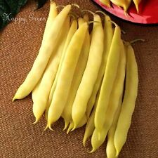DWARF BEAN CAPITANO YELLOW - 60 SEEDS - ROMANO TYPE - FLAT PODDED