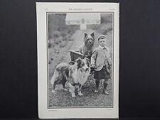 """The Breeder's Gazette Nov 28 1906 Photographic Print #08 Dogs, """"All Scotch"""""""