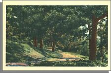 8008: 1940's USA Post Card - Scenic, Country Dirt Road in a Forest in Summer!