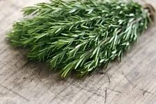 Certified Organic Rosemary Seed (200ct) Usa Grown Quality Garden