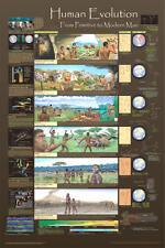 Human Evolution Educational natural history chart poster poster Print 24x36