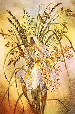 Sulamith Wulfing 1940 THE IRIS Botantical print FLOWERS Art Card Matted