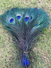 """Free shipping 5-100pcs Staining Peacock Tail Feathers about 10-12 Inches"""""""