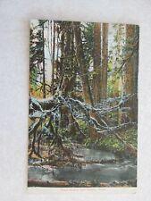E405 Postcard Trout Stream near Seattle Washington WA