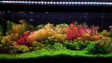 live aquarium plants 55 Stems Cuttings! Colorful And Great Variety!!
