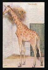 Animals GIRAFFES Tuck Oilette #9054 Animal Studies c1900/20s? PPC