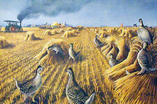 SHARPTAILS AT HARVEST TIME (Am. Classics #2) Signed By Les Kouba