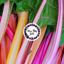 MANGOLD ''5 COLORS'' 100 Samen Regenbogen Sorte mehrfarbig von Rosa bis burgunde