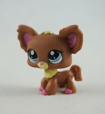 Littlest Pet Shop LPS Toys #1623 Chien Papillon Blue Eyes Brown Chihuahua Dog