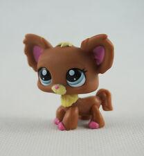 Littlest Pet Shop LPS Toys #1623 Chien Papillon Blue Eyes Brown Chihuahua Dog