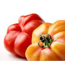TOMATE MONTSERRAT 100 Semillas Seeds