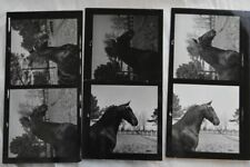 Vintage Photo Proofs Horse Head 842