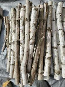 Beautiful Long White Birch Wood Logs Harvested on Native Wisc Lands