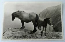 Postcard - Pony and Foal on Exmoor Real Photo - Valentine's K3733 / Posted 1958
