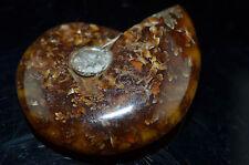 """1.96"""" by 1.55""""  Ammonite Iridescent Fossil Specimen Nautilus Marine NUM30"""