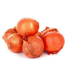 Shallots Red Sun 30x onion sets Allotment Grow Your Own Top Quality