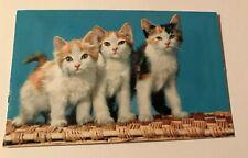 Vintage Squeak 3 Calico Cat Kitten Kitty Postcard