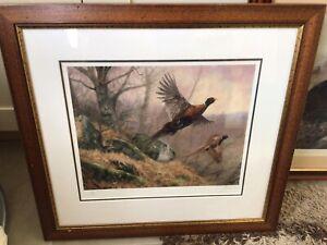 Pheasant In Flight Framed Print. John Trickett