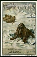 Walrus Sea Ocean Mammals 1930s Trade Ad Card