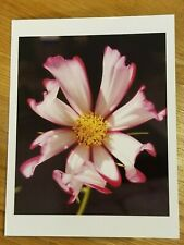 (1) Cosmos Iowa glossy photo notecard with envelope gift quality
